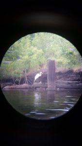 A great egret spotted through binoculars on a Newtown Creek paddle, July 7, 2016